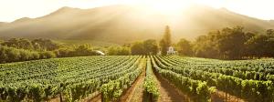 Buitenverwachting Vineyard