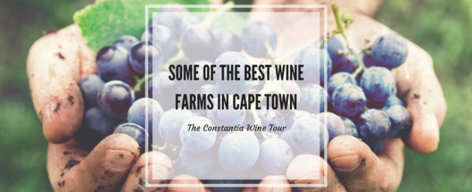 some of the best wine farms in cape town