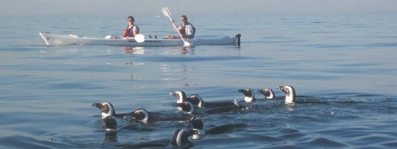 kayaking simons town