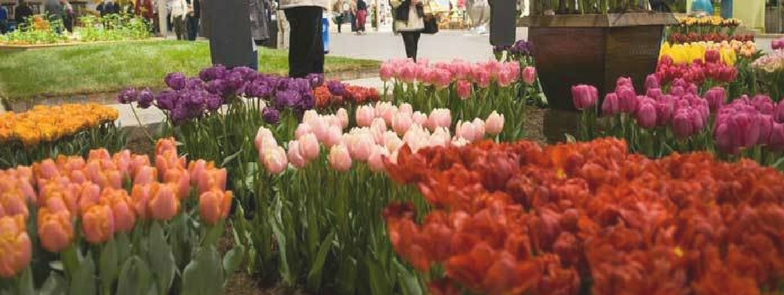 hermanus flower festival